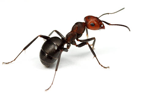 The meaning and symbolism of the word Ant