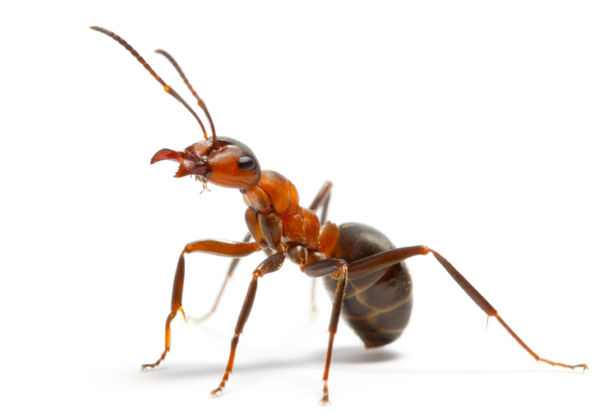 Ant High Definition Wallpaper | Online Dream Book Dreamicus.com