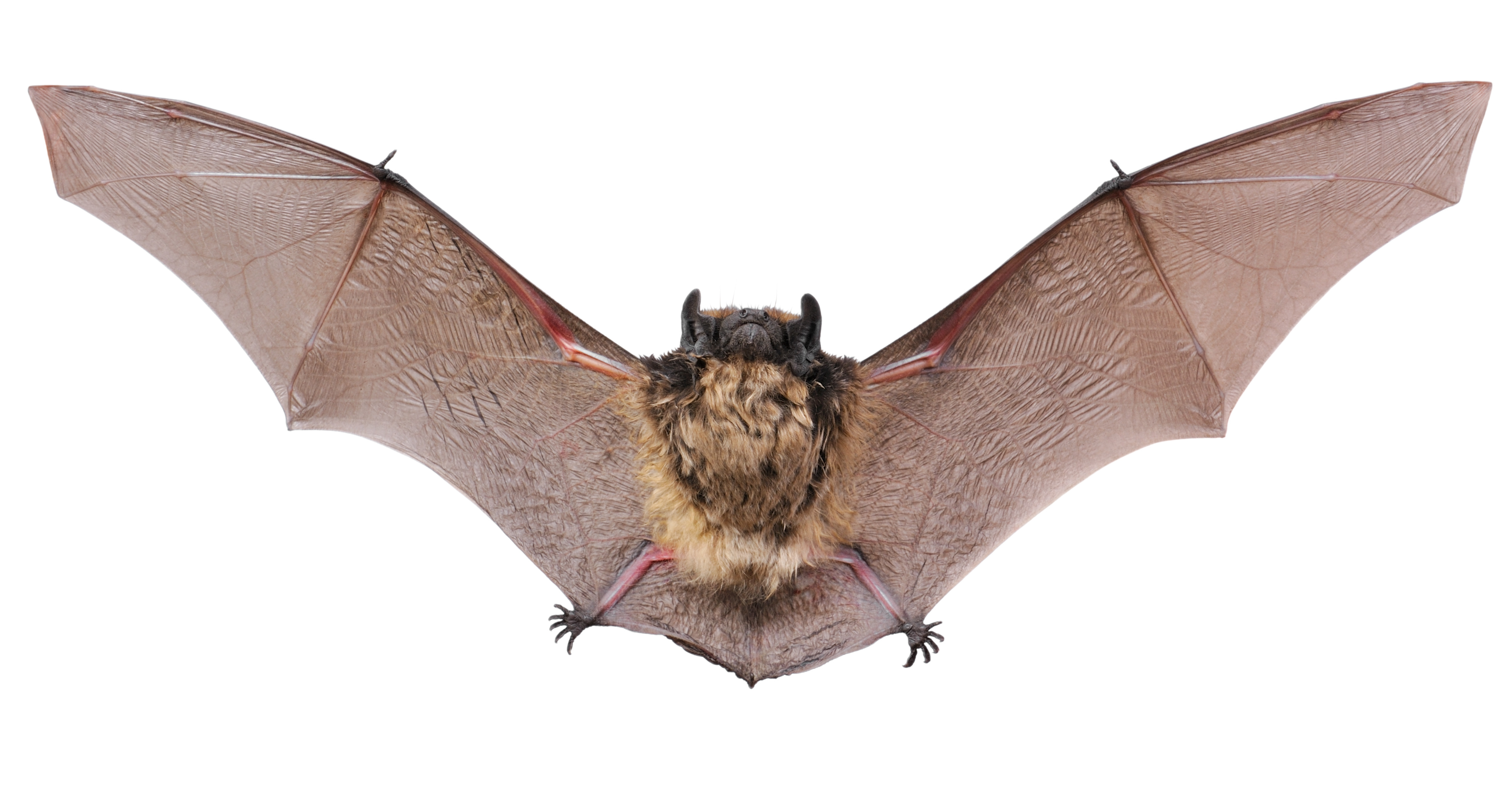 Bat, 1194.03 Kb, Freddy Ashbaugh #02