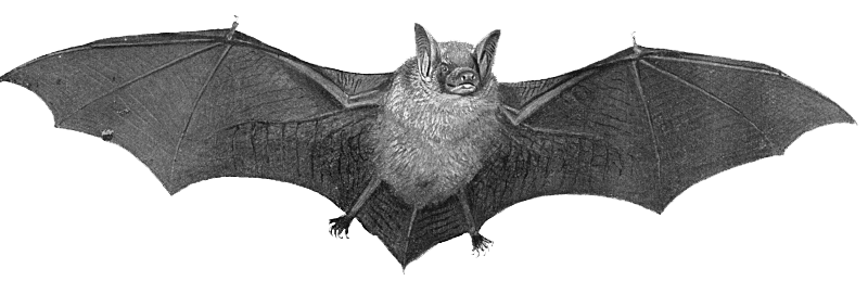 Amazing Interpretation of Dream Bat - Dreamicus.com