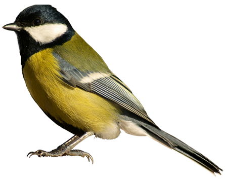 Computer Background Bird, VXW-42
