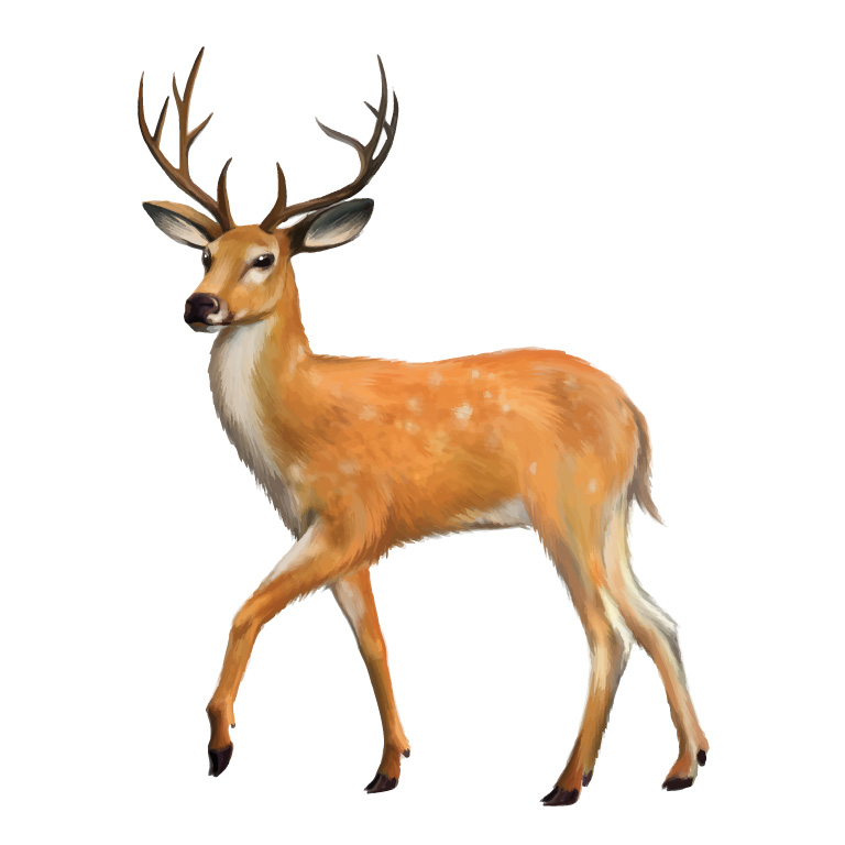 the meaning and symbolism of the word deer