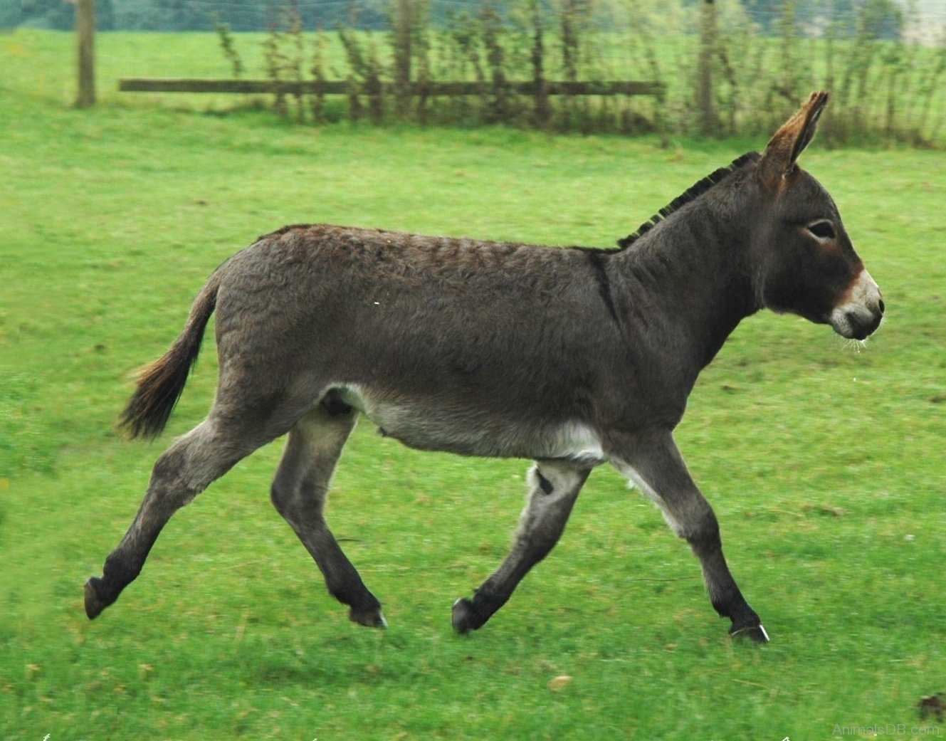 The Meaning And Symbolism Of The Word Donkey