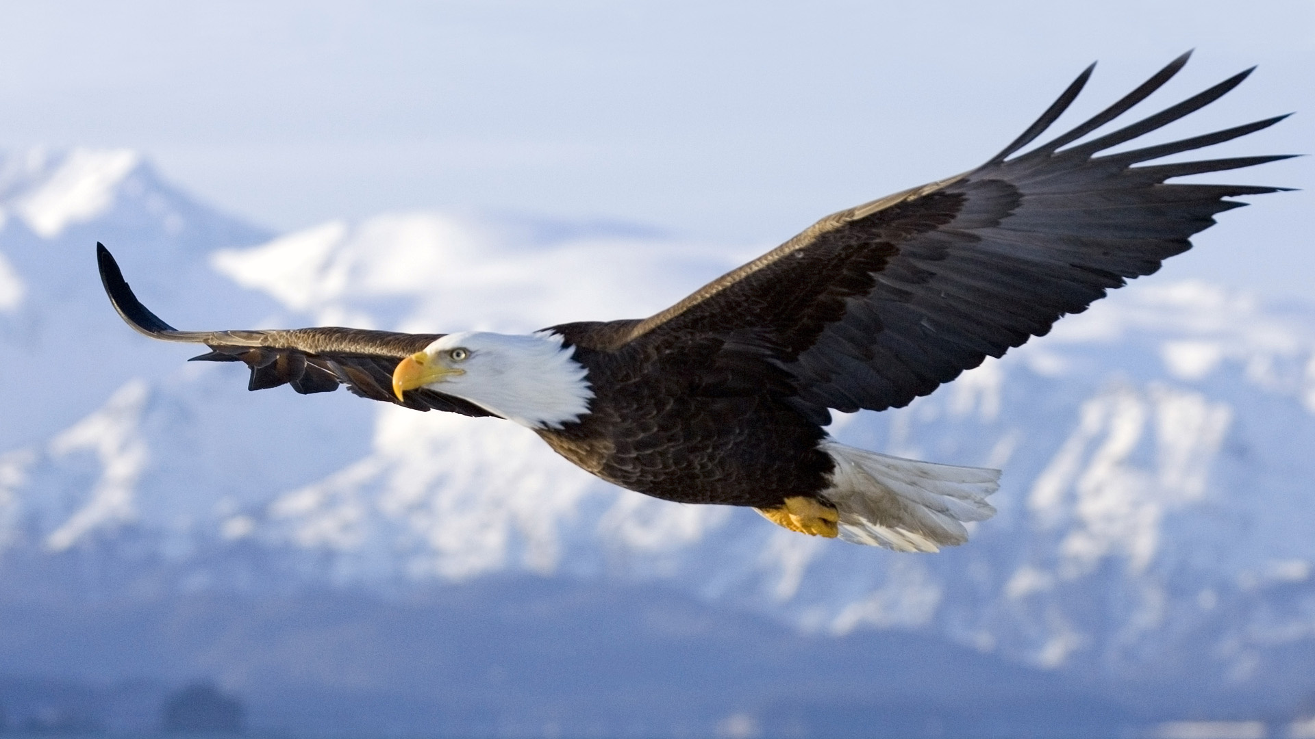 The meaning and symbolism of the word eagle eagle 32ljp32 2164815 buycottarizona