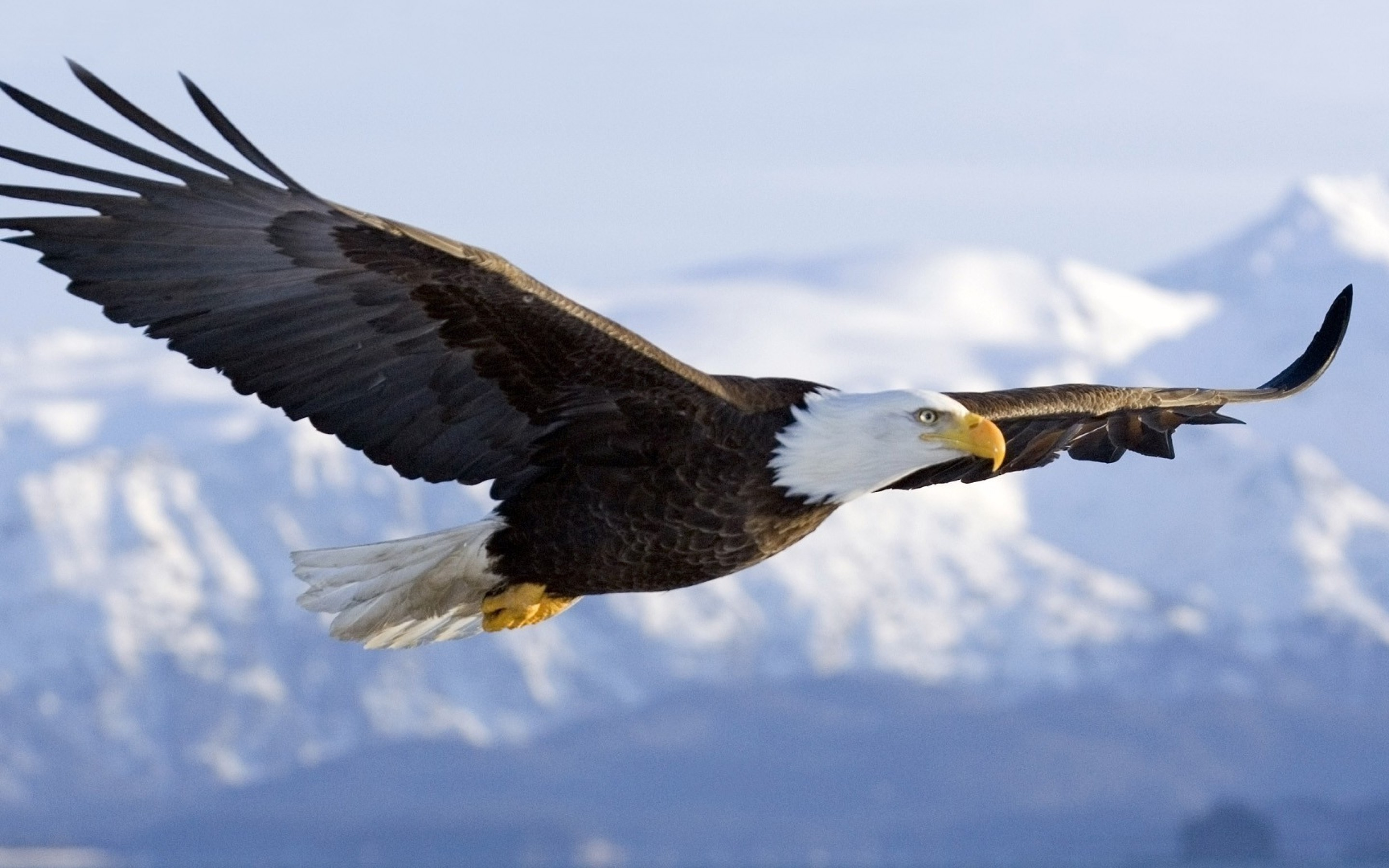 The meaning and symbolism of the word Eagle