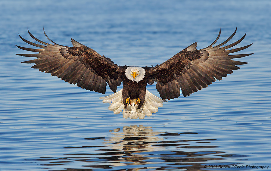 Lovely Background - Eagle, Quinton Emberton