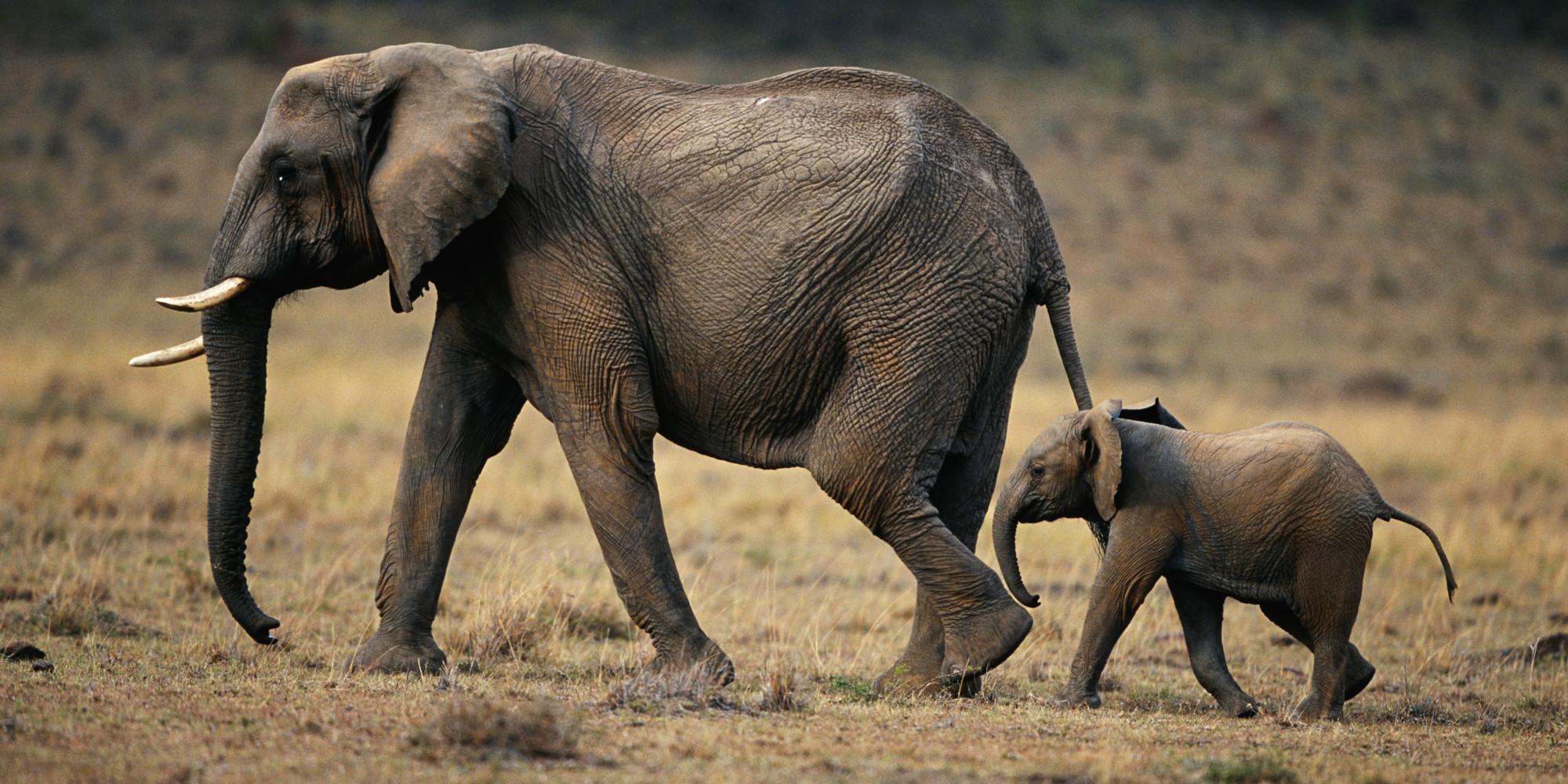 Elefanten 94