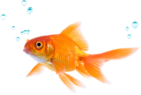The meaning and symbolism of the word fish for Ok google plenty of fish