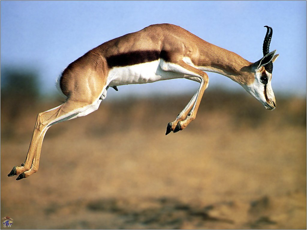 Awesome Meaning of Dream Gazelle - Online Dream Book Dreamicus.com