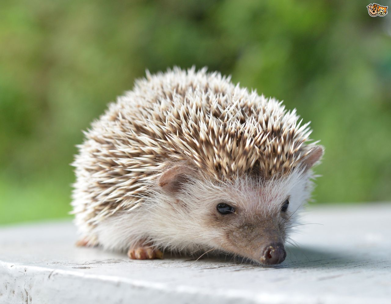 Dream Symbol of Hedgehog ? #2175871 135.04 Kb