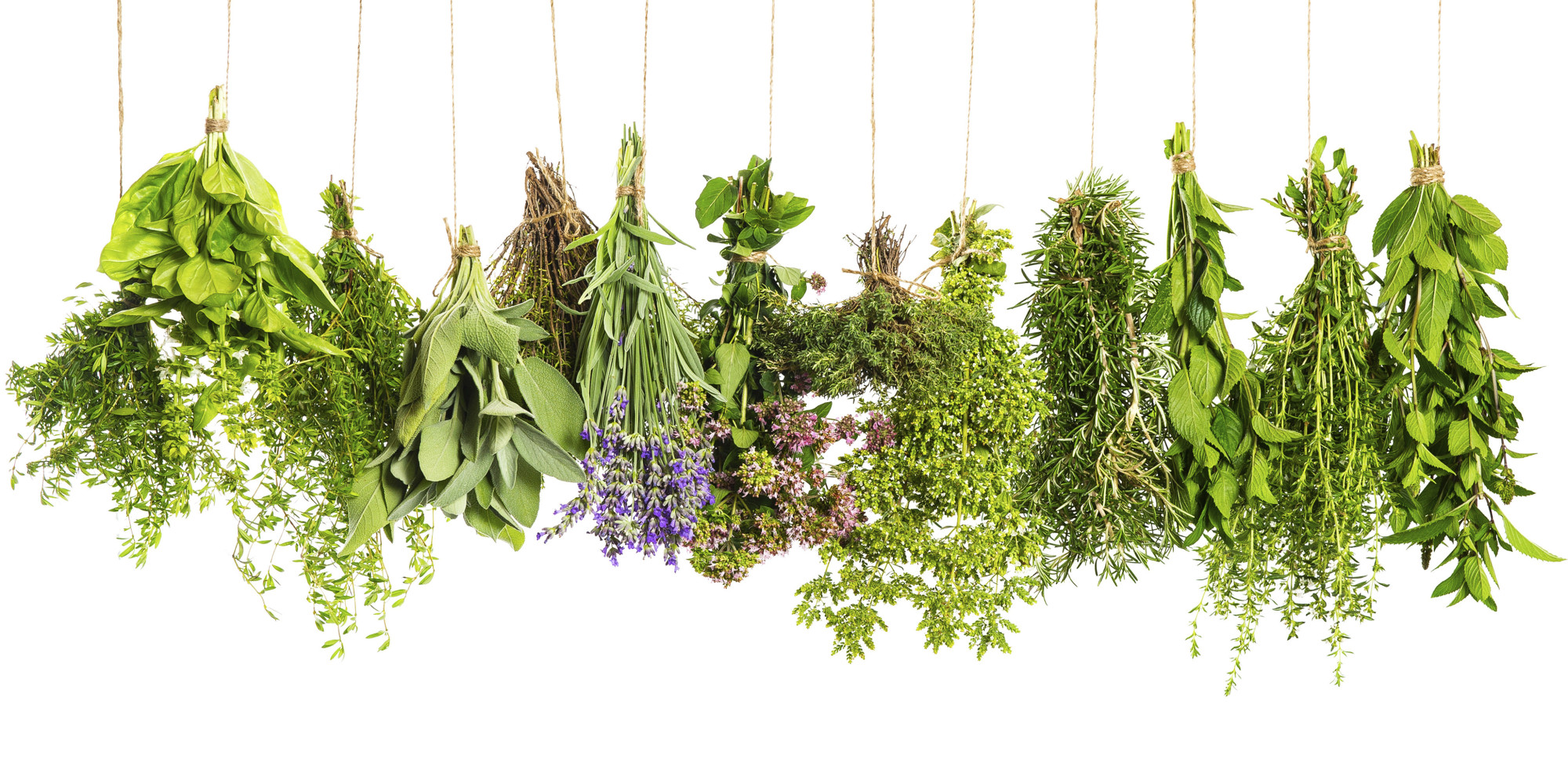 Herbs Full HD Background | Dreamicus