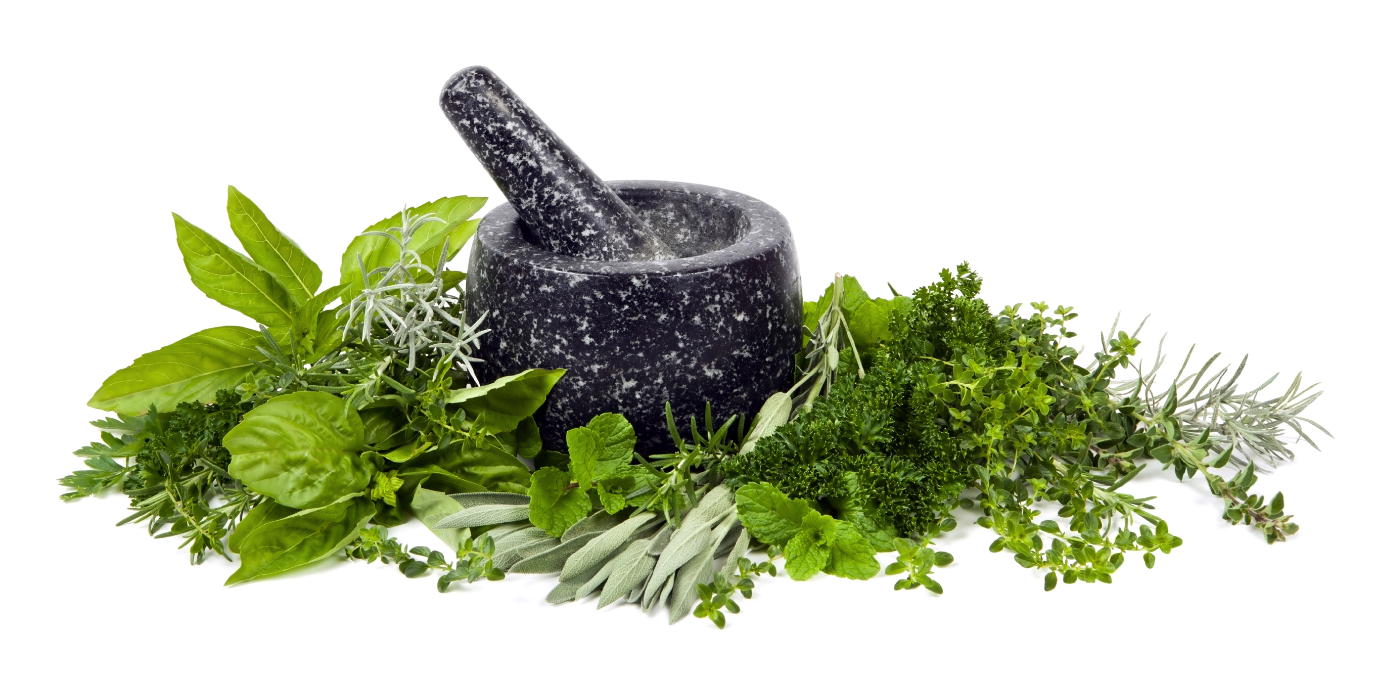 The Meaning And Symbolism Of The Word Herbs