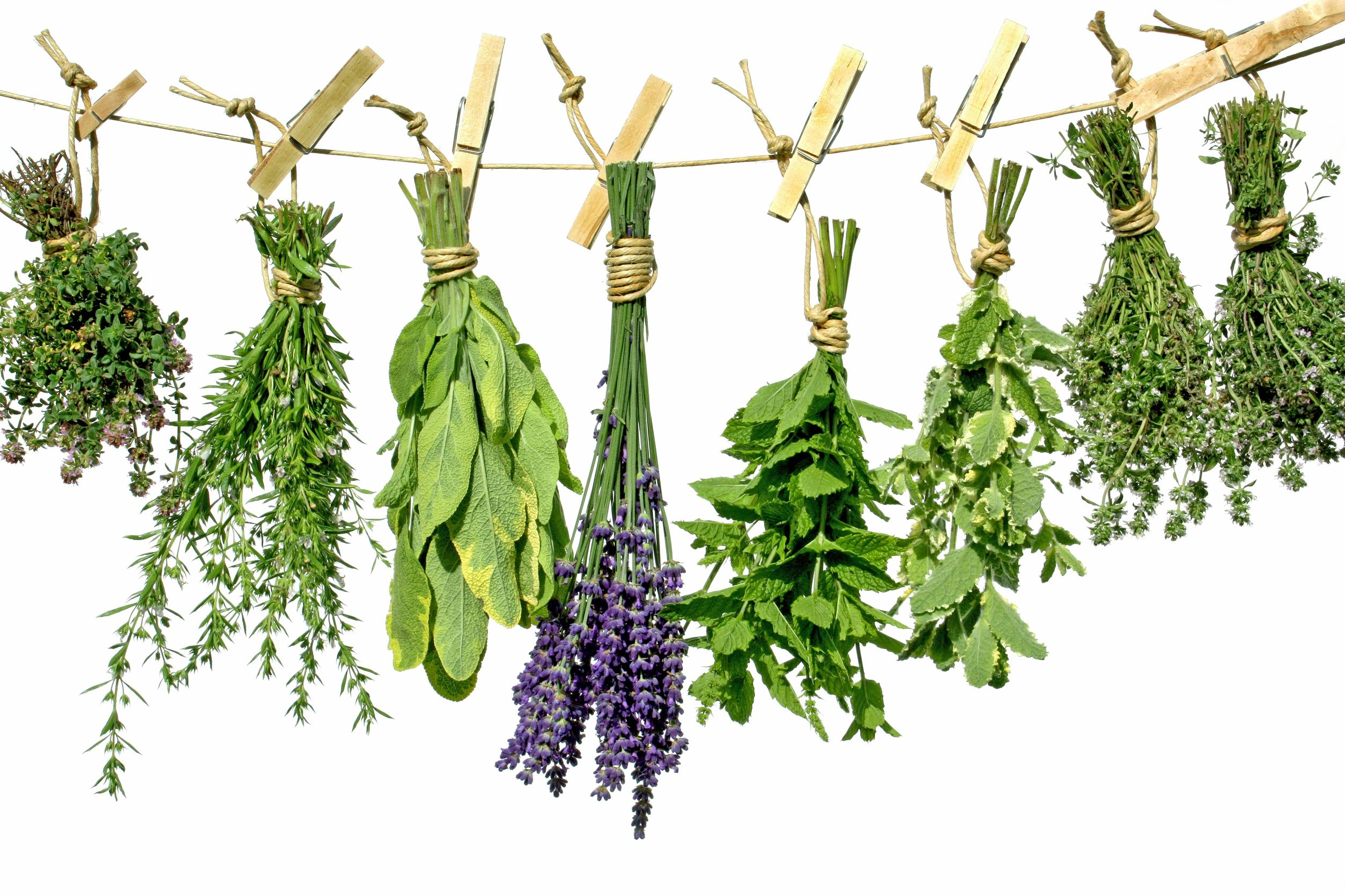 Cool Meaning of Dream Herbs - Online Dream Book Dreamicus.com