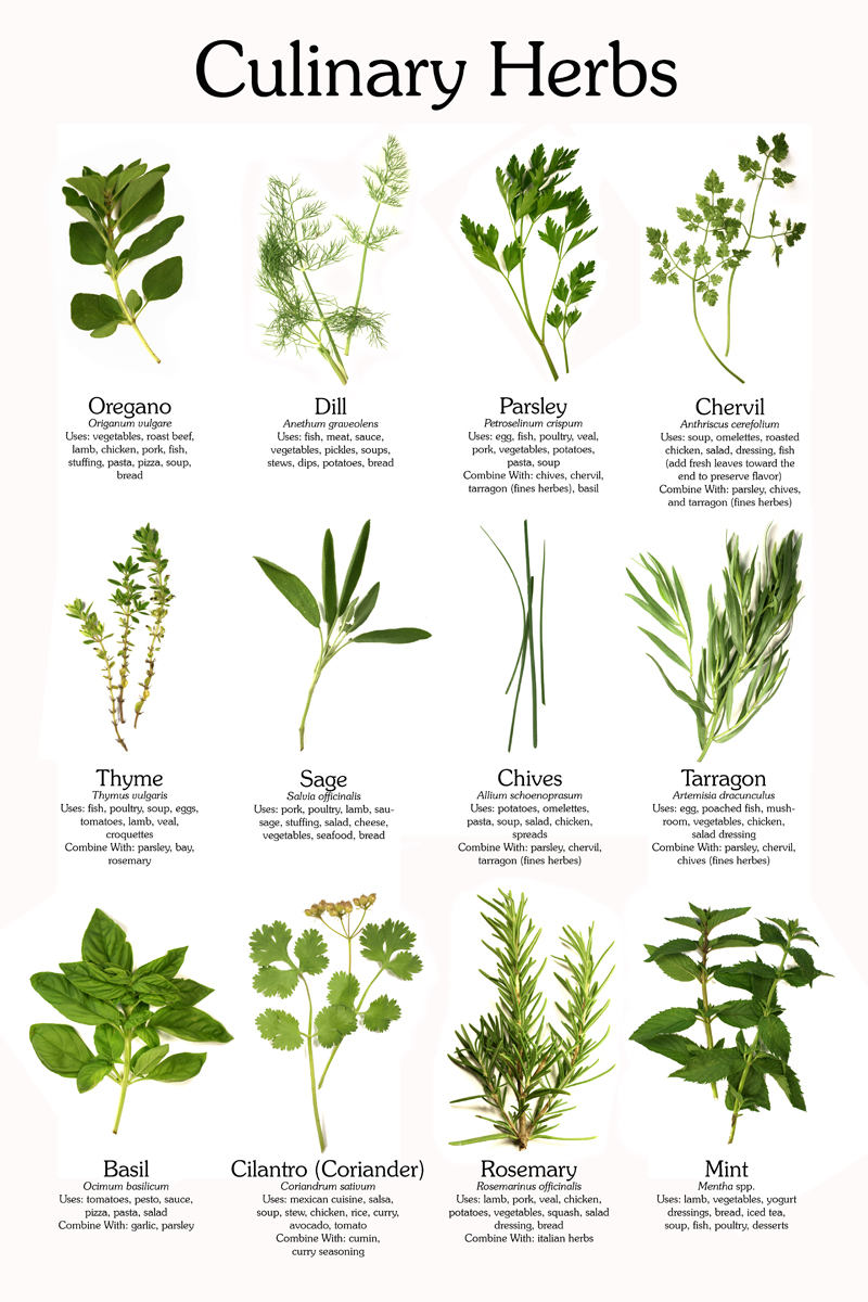 CIXQ53: Awesome Herbs