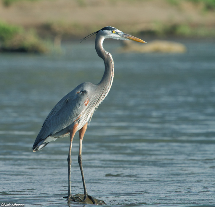 Laptop Background Heron, MNV-78