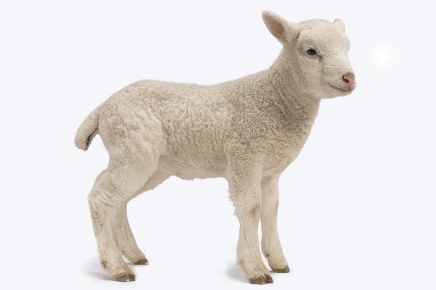 Cool Dream Interpretation Lamb - Dreamicus Dreamer's Dictionary