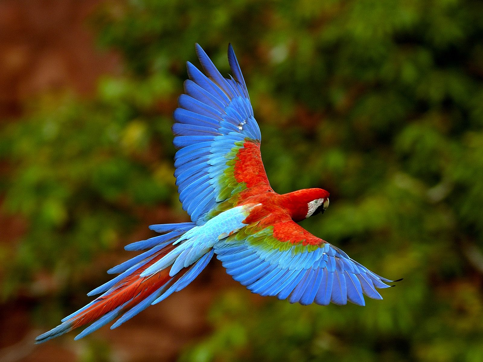 Amazing Dream Meaning Macaw - Dream Analyzer