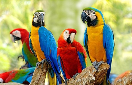 The meaning and symbolism of the word - Macaw