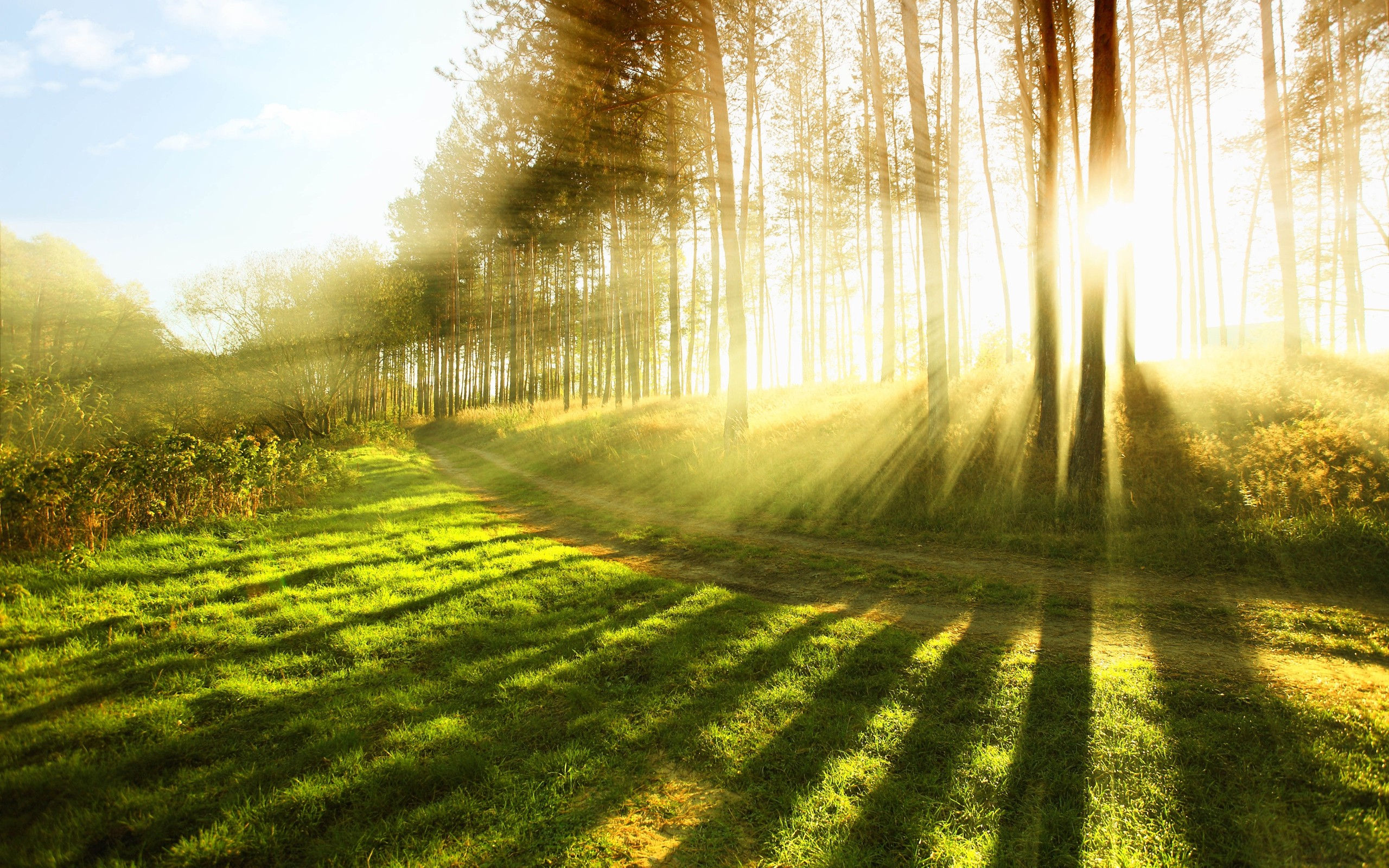 XHS71: Nature, 1317.6 Kb, by Laurie Mcmiller #2180283
