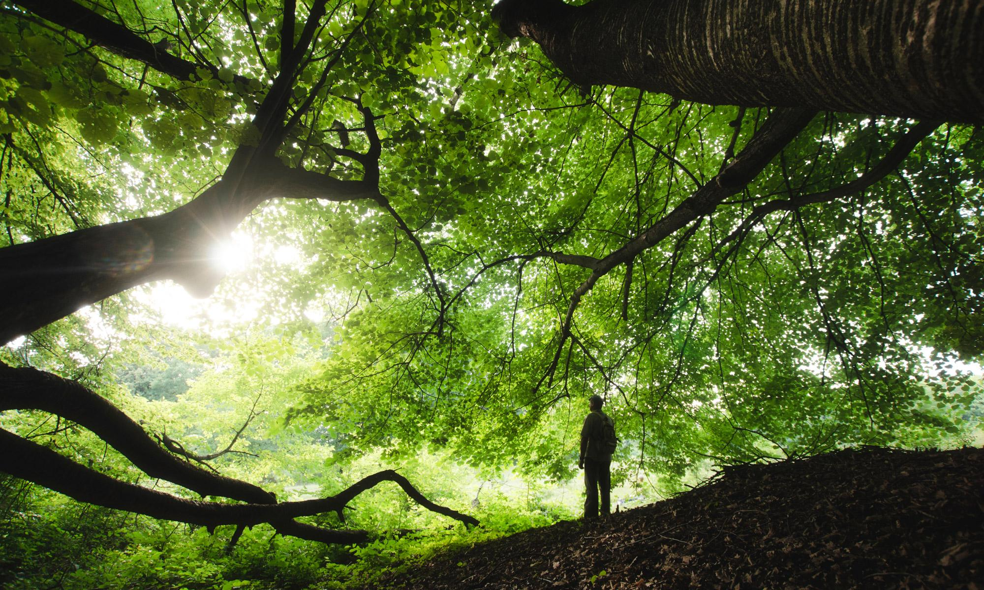 Nature High Quality Background | Dictionary of Dreams
