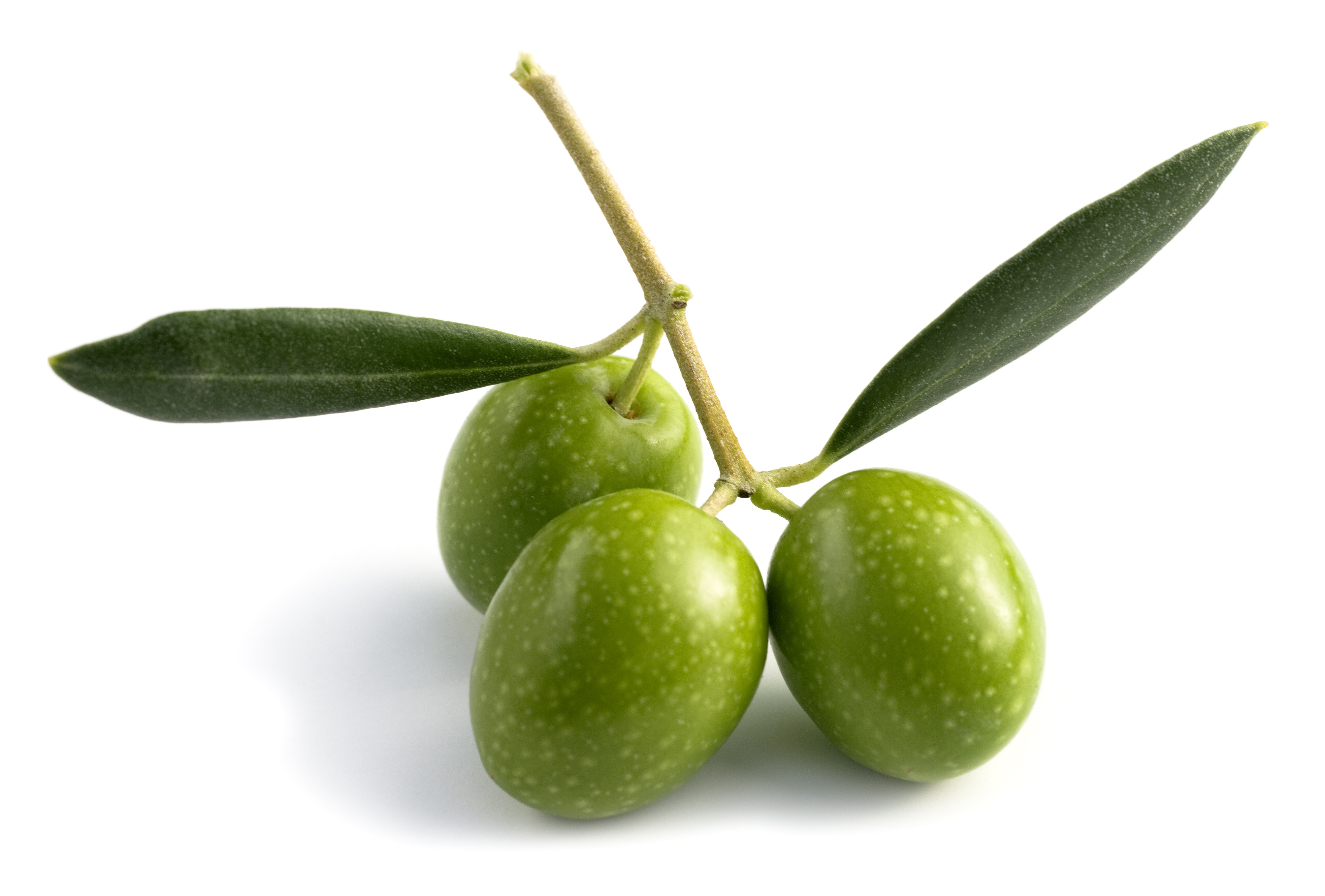 Olive Wallpaper | SVF-2171134