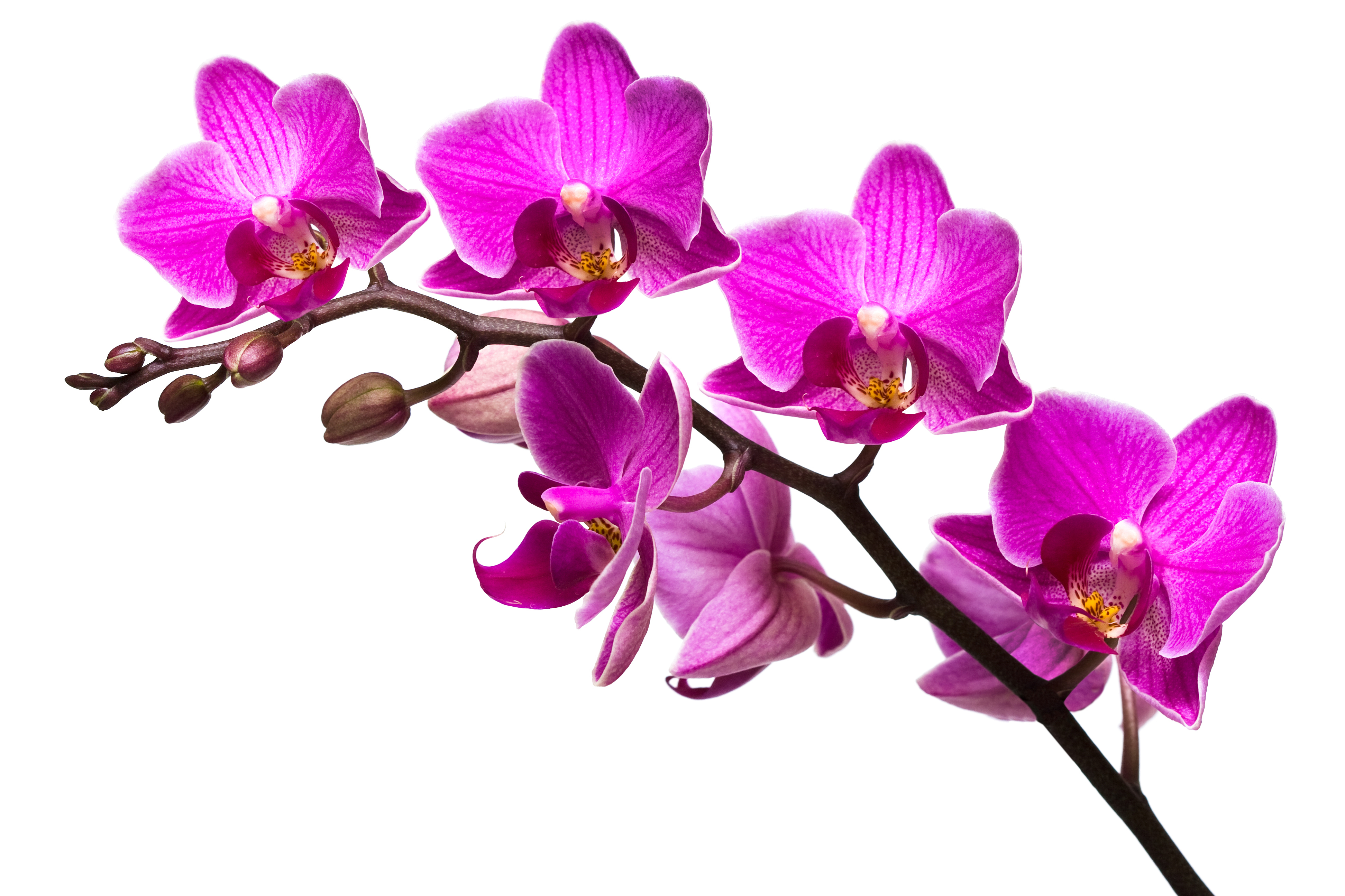 Orchid Dream Imagery by An Wurm, 69BZQZ