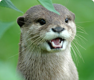 Otter Wallpaper | LIG-2171385