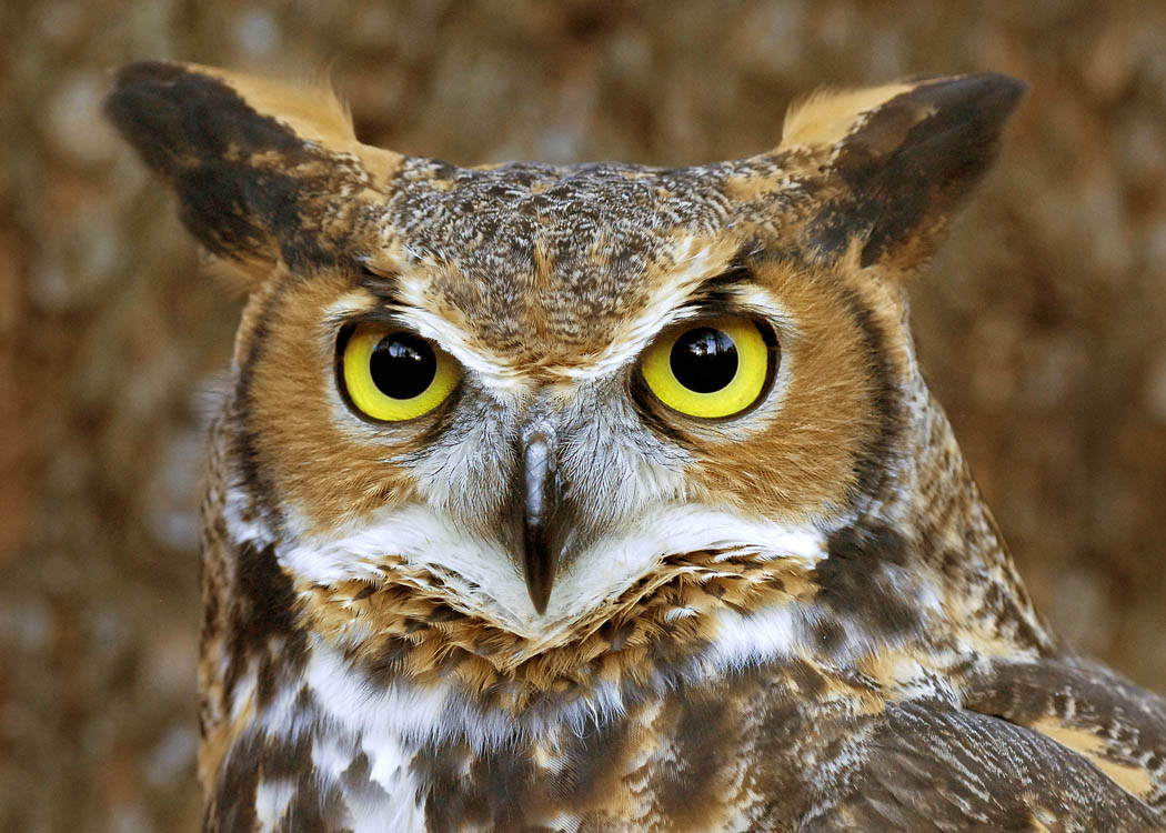 The meaning and symbolism of the word owl owl 1601 kb sammy rooker 01 biocorpaavc