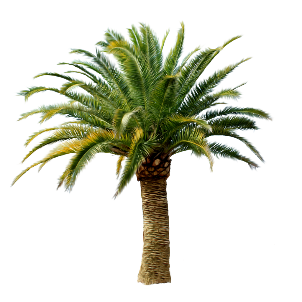 Palm Background | XOV-2181112