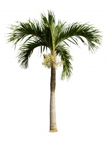 Fresh Palm for Desktop