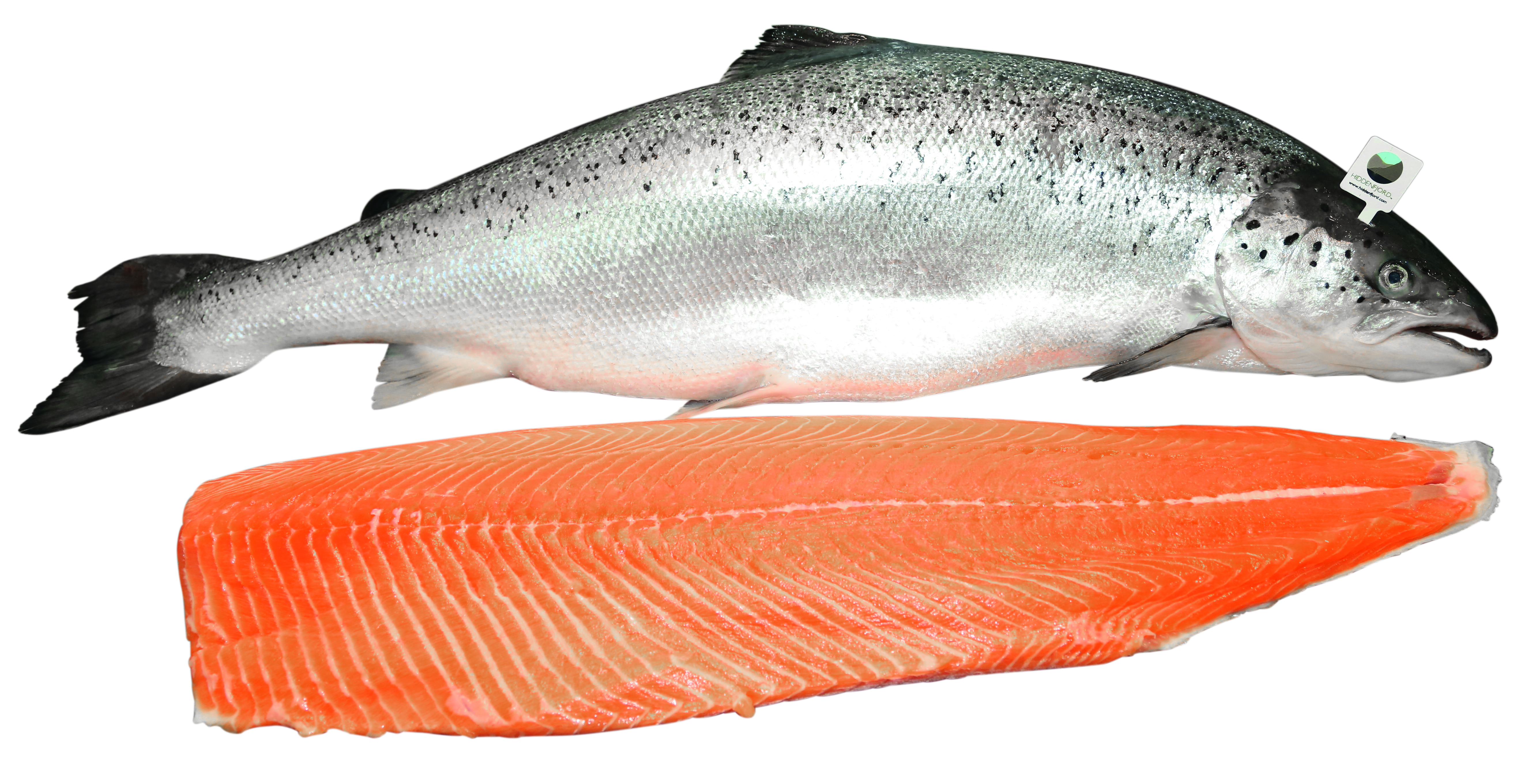 By Ernie Pickens V.54: Wonderful Salmon Picture